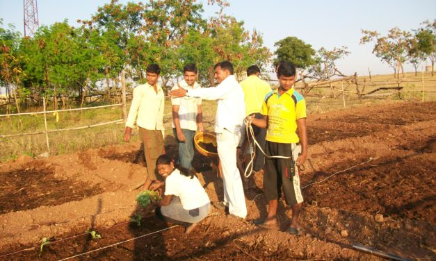 Abundance Farming Project at Vigyan Ashram