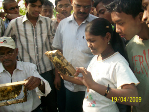 Apeculture (Honey Bee Keeping ) training……………….