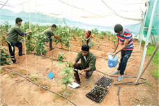 Basic Agricultural Course at Vigyan ashram……….