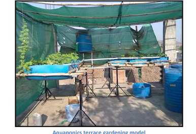 Paper on – Aquaponics experiment (Cucumber trial )