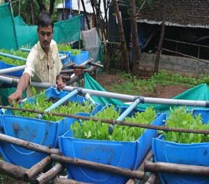 Recirculating Aquaculture System (RAS) trials started at Vigyan ashram ….