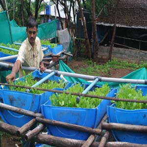 Aquaponics project at Vigyan Ashram Pabal